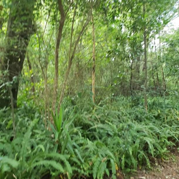 Builder's Extra Special: 0.32 Acre Vacant Land.